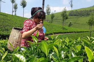 Munnar Tea Trail Tour