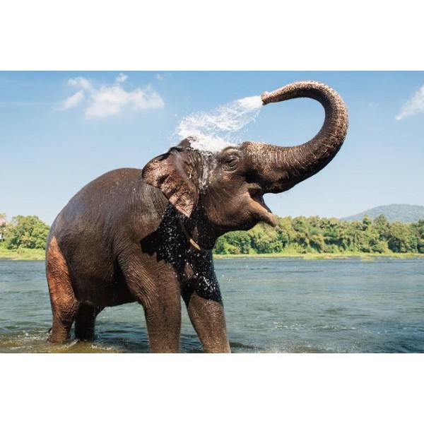 Elephant Training Center & Athirappilly Falls-1