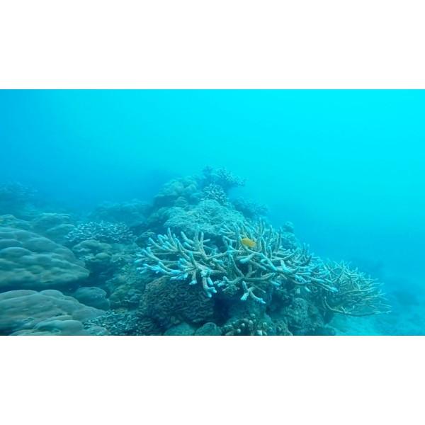 PADI Scuba Diver in Andaman-1